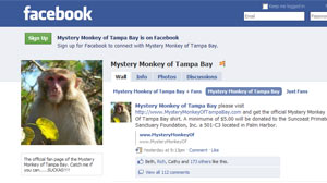 Mystery Monkey of Tampa Bay