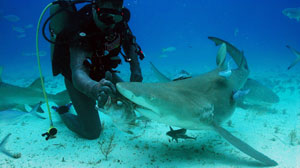 Shark Week Offers More Glimpses Into Terrifying, Predator-Infested Waters