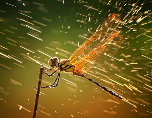 2011 National Geographic Photo Contest