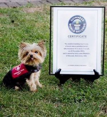 Meet the World's Smallest Working Dog