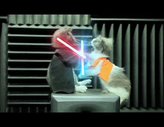 ht_jedi_kittens_nt_110919_ssh - The Lightsaber - Photos Unlimited