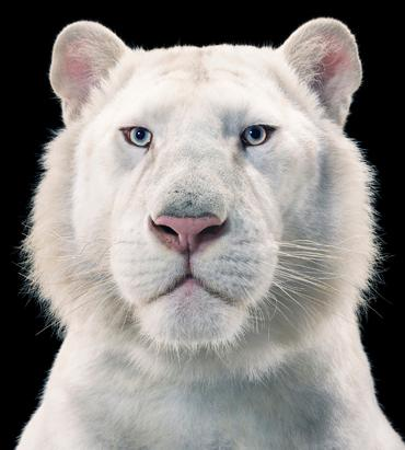 More Than Human: Animal Portraits