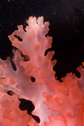 Census of Marine Life