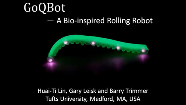 PHOTO: This video grab provided by iop.org showcases robots that mimic how caterpillars ballistically fire and roll themselves away from predators.
