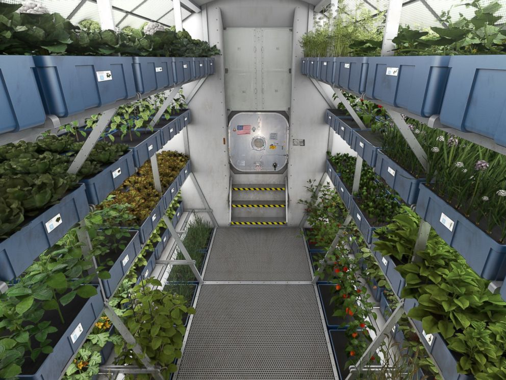 PHOTO: NASA plans to grow food on future spacecraft and on other planets as a food supplement for astronauts.