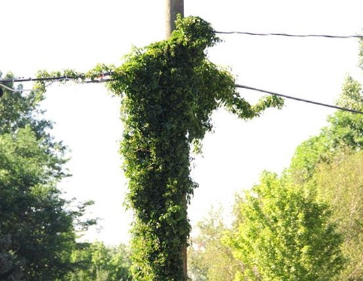 Jesus Resurrected on a Utility Pole?