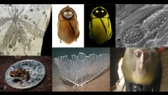 PHOTO: Scientists announce top 10 new discovered species list for 2013.