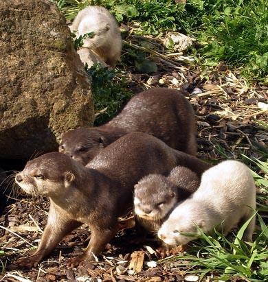 Albino Creatures