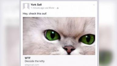 PHOTO: The Wickr app hides secret messages in plain sight behind cat photos.