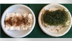 PHOTO: Five 9th graders from Denmark have shown that garden cress won't germinate when placed near a wifi router.