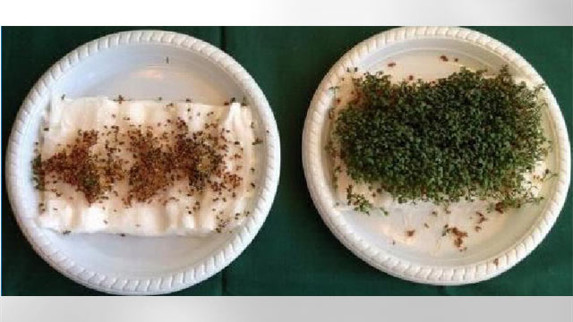 Five 9th graders from Denmark have shown that garden cress won't germinate when placed near a wifi router.