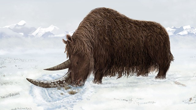 PHOTO: Artist's concept of woolly Rhino
