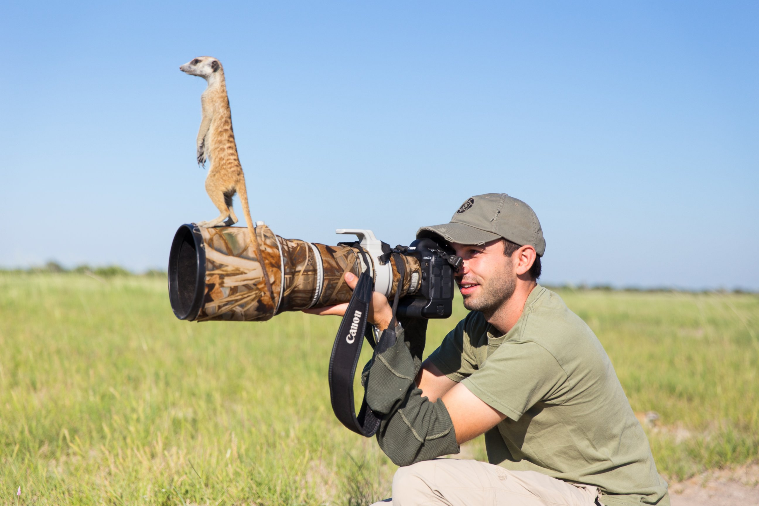 A Meerkat Takes Posing for the Cameras to a New Level
