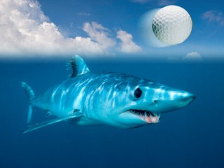 Shark and Golf Ball
