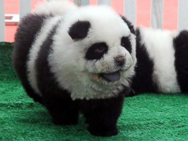 Photos: Puppy Pandaemonium Takes Over China