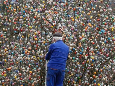 PHOTO: German pensioner Volker Kraft decorates an apple tree with Easter eggs in the garden of his summerhouse, in the eastern German town of Saalfeld, March 19, 2014.