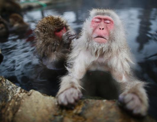 Watch Snow Monkeys Take the Plunge