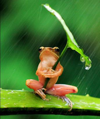 Frog Stays Dry With Tiny Umbrella