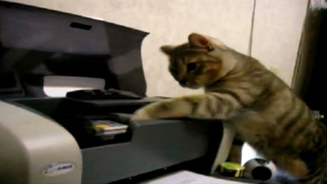 Video: Cats Battle Printers in Hilarious Web Videos