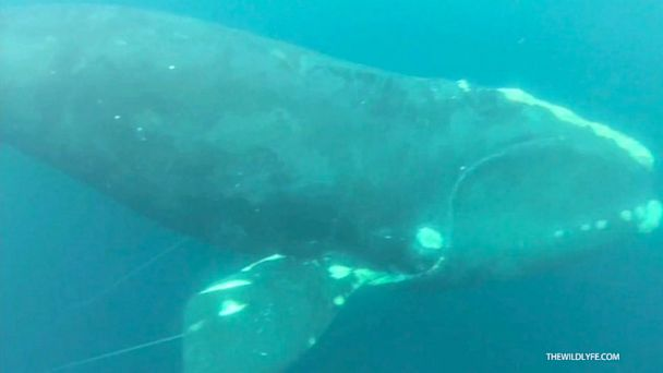 HT whale rescue nt 130717 16x9 608 Instant Index: Tourism, the Google Way