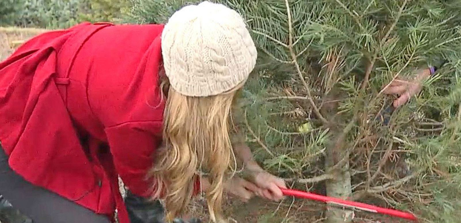 Cut Down Your Own Tree at a Christmas Tree Farm - ABC News