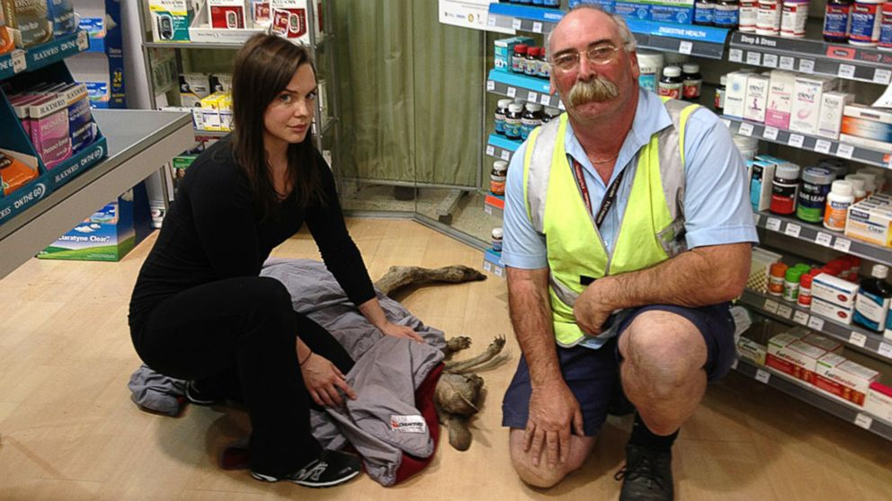 PHOTO: Wildlife volunteer rescuers Ella Rountree, left, and Geoffrey Fuller pose for a photo with a kangaroo they captured at Melbourne airport, Australia, Oct. 16, 2013, after the injured kangaroo hopped into the airport terminal pharmacy.