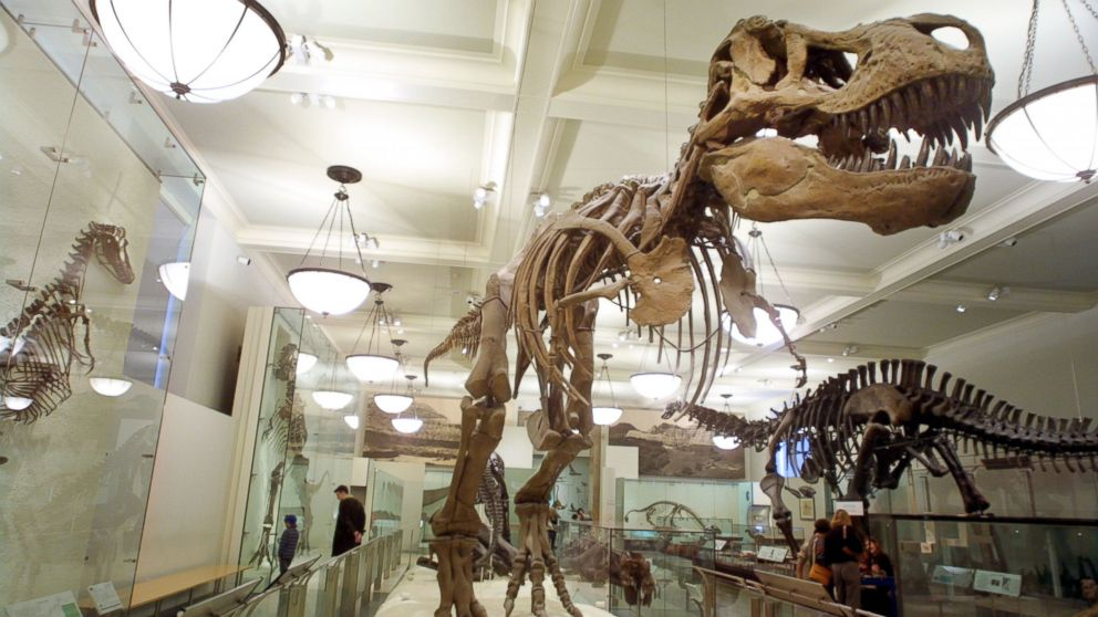 PHOTO: Visitors view a dinosaur exhibit at the American Museum of Natural History, Nov. 29, 2001 in New York City.