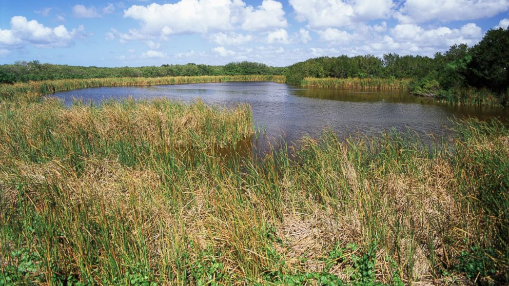 PHOTO: View of Eco pond, Everglades National Park, Florida.