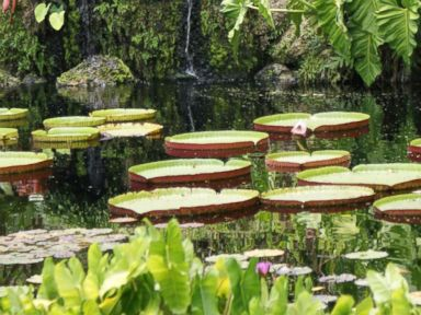 PHOTO: Fairchild Tropical Botanical Gardens, Coral Gables, Fla.