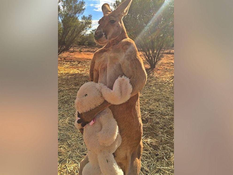 PHOTO: Roger hugs his stuffed bunny