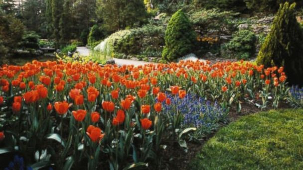 PHOTO: Keukenhof Gardens, Holland.