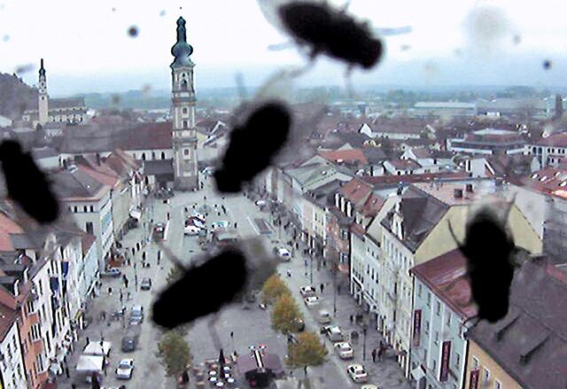 HT kurt caviezel webcam 14 sk 140101 blog Photo Bombing Birds and Bugs
