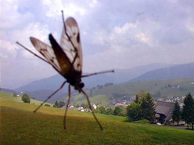 HT kurt caviezel webcam 15 sk 140101 blog Photo Bombing Birds and Bugs