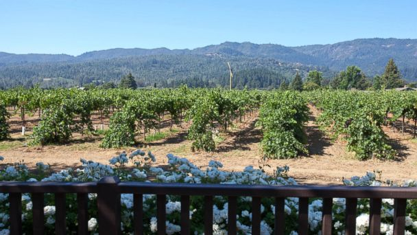 PHOTO: Napa Valley, Calif.