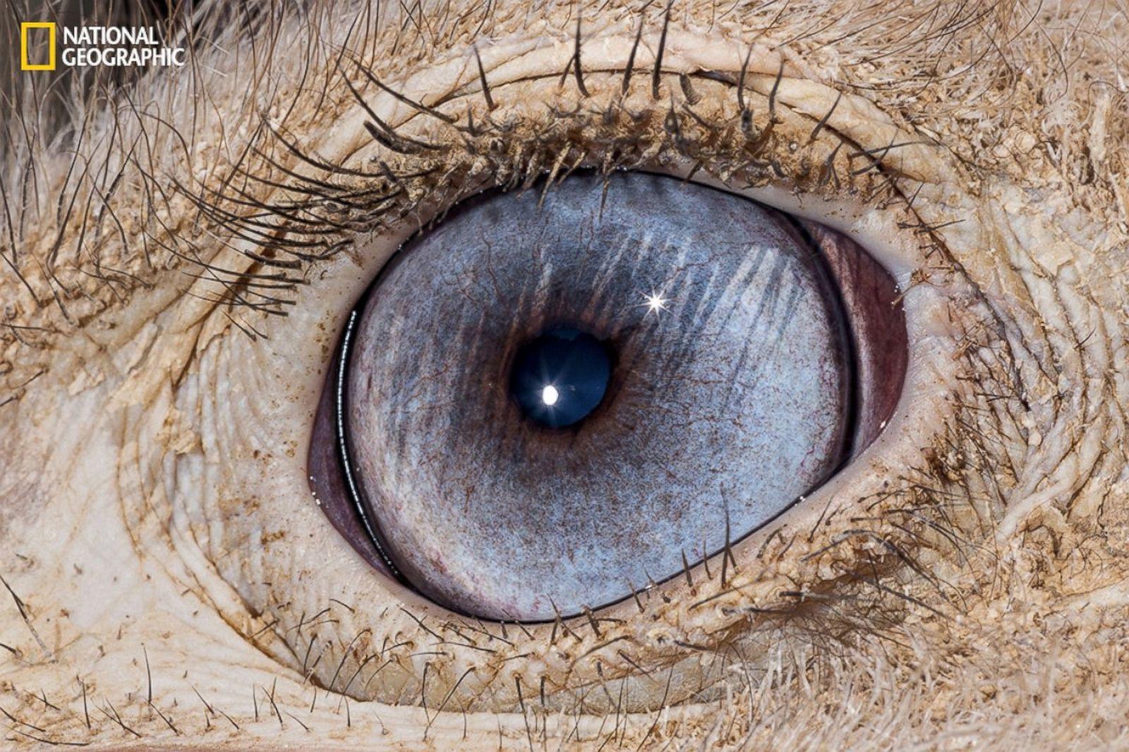 Fein Wolf Eye Anatomy Fotos Menschliche Anatomie Bilder  -> 3Cad Evolution Tutorial