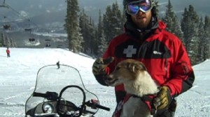 Video: Ski resort uses dogs to help rescue avalanche victims.
