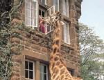 VIDEO: The World?s Weirdest Hotels