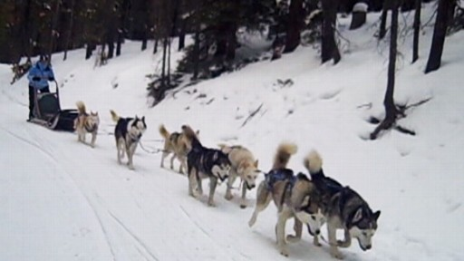 Dog Sledding 101 in Colorado Video - ABC News