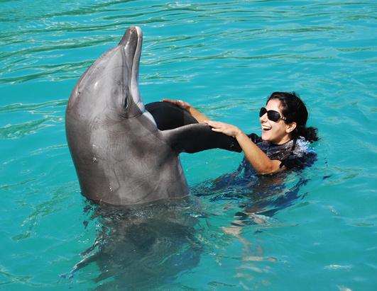 http://a.abcnews.com/images/Travel/abc_dolphin_sara_080507_ssh.jpg