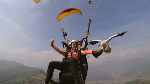 abc ginger zee parahawking kb 130611 wblog Parahawking: Paragliding With Vultures in Nepal