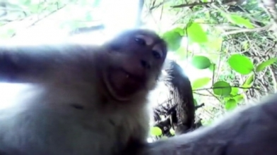 A tourist at a Balinese temple got his expensive camera stolen by a mischievous monkey.