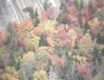 Video: North Carolina mountains leaves preview.