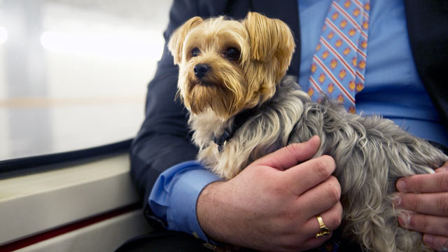 PHOTO: Staffers escort Sen. Scott Browns dog Koda, riding the subway from the Capitol in this Dec. 6 2011 file photo. A new bill would allow dogs to ride Amtrak as well.