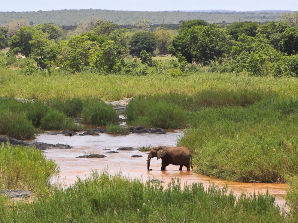 PHOTO: Elephant on the Olifants River in Kruger National Park, South Africa.