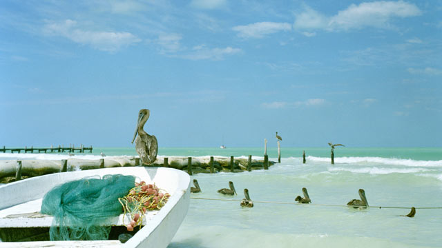 PHOTO: A Pelican sits on small fishing boat by the ocean in the island of Holbox, Mexico.