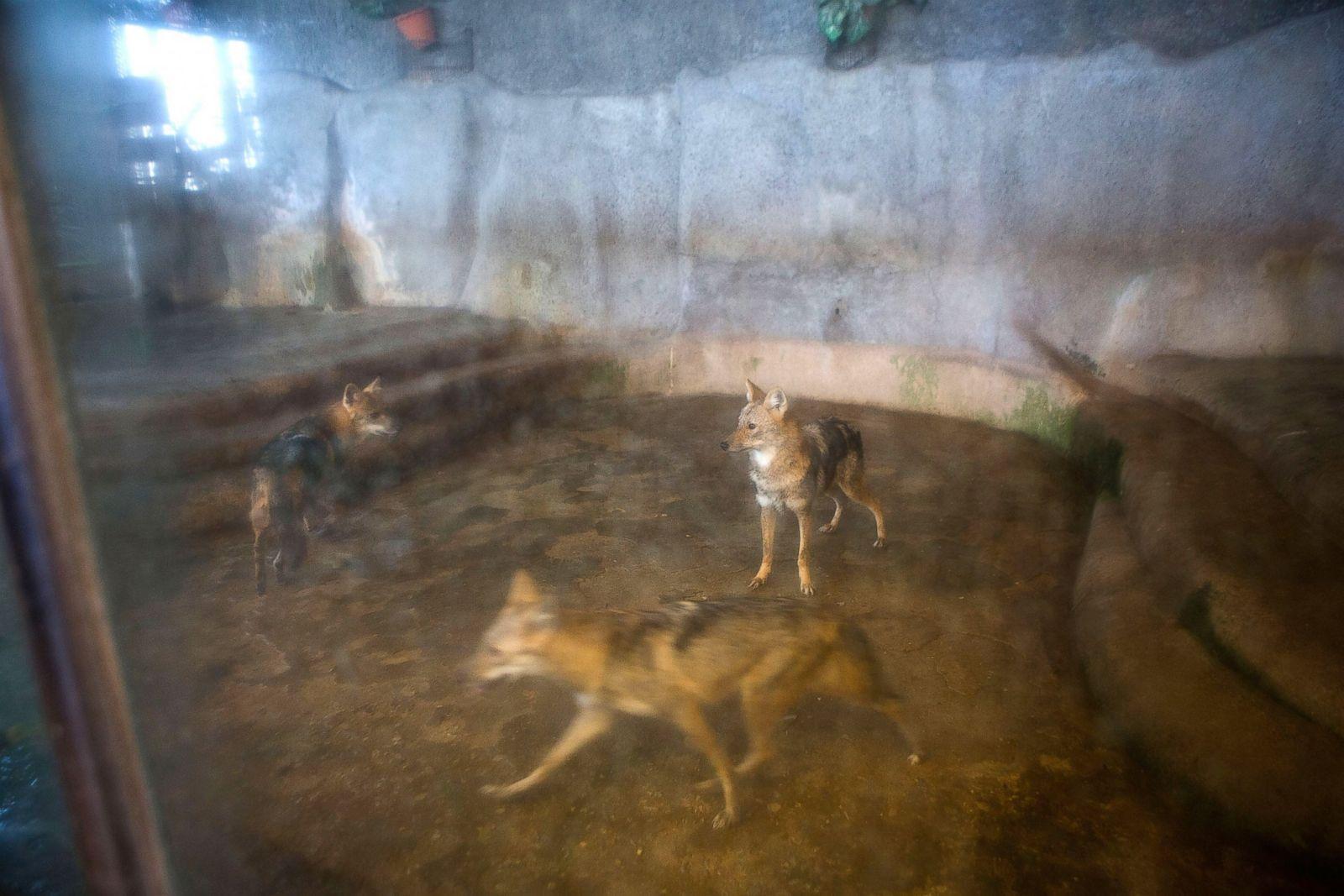 Decrepit Department Store Zoo Draws Protests Photos  Image #9 - ABC News