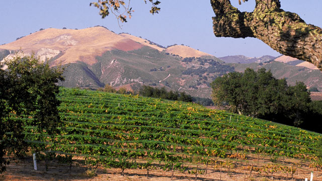 PHOTO: The Zaca Mesa Vineyard, in Santa Barbara, Calif. is shown.