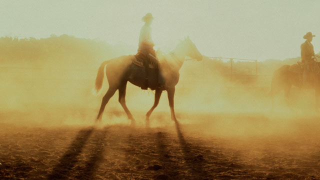 PHOTO: A cowboy trots on his horse through the morning Texas haze.