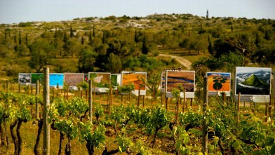 "PHOTO: ""Art de Vivre"" in the Languedoc"