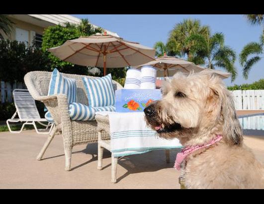 Top 10 Pet-Friendly Hotels